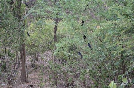 CELEBRATING ENCHANTED FORESTS