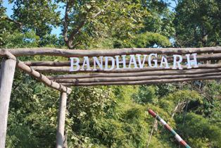 At last into the home of the White Tiger: Bandavgarh