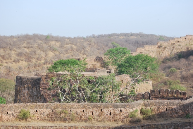 ranthambore fort and forest