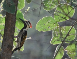 the first glimpse unveils a flameback