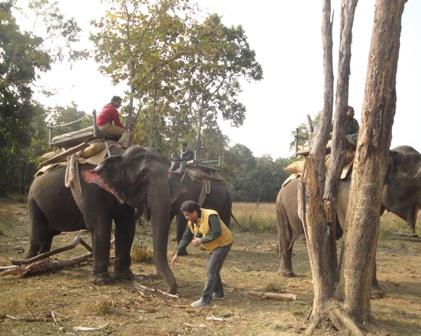 Elephant and I
