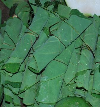 Leaves of ARBI