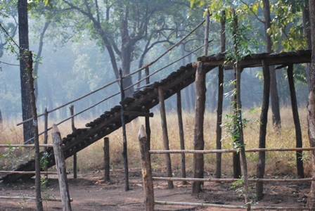 the staircase to elephant point