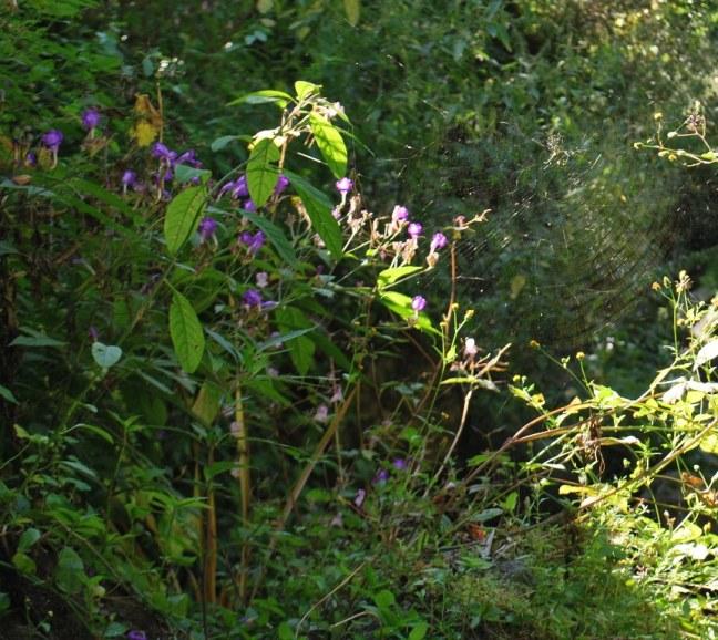 wildflowers sway