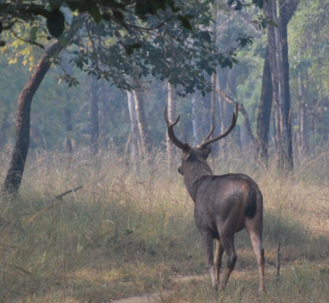 disappears never to meet again