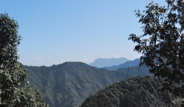 Through the limbs of Himalayan Oak trees