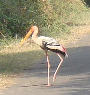 the stork leg up