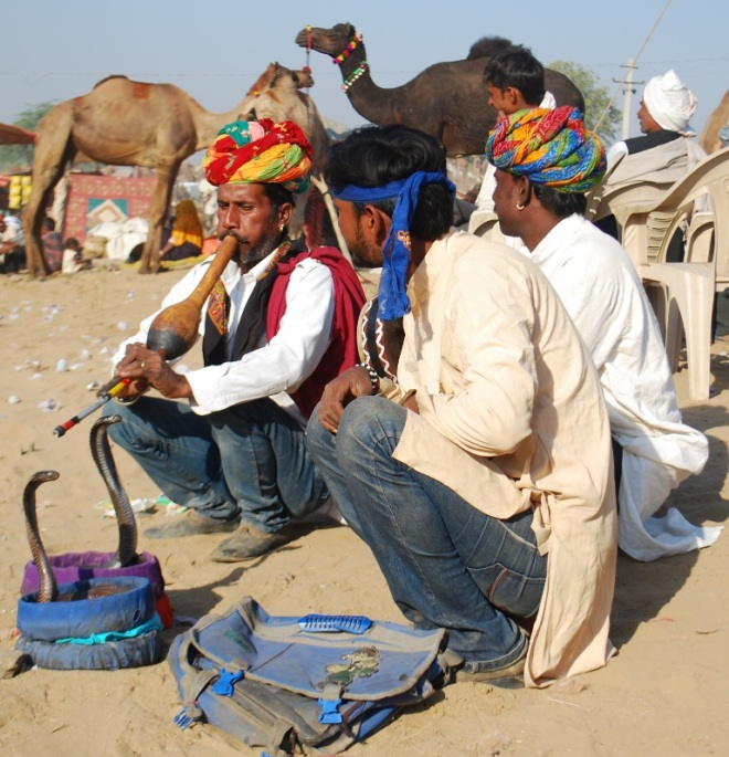 two cobras in a camel fair
