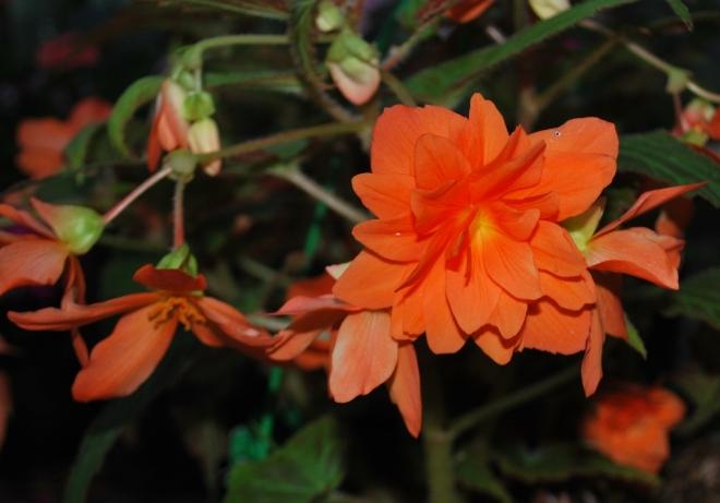 a bouquet of orange