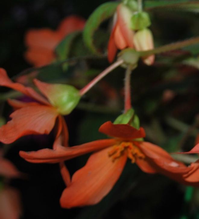 buds of orange