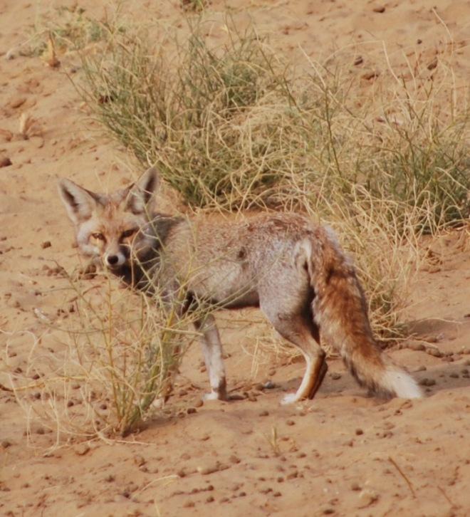 in the open desert