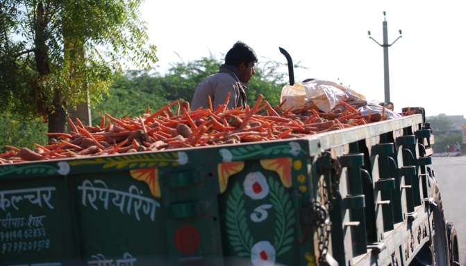 carrots to market