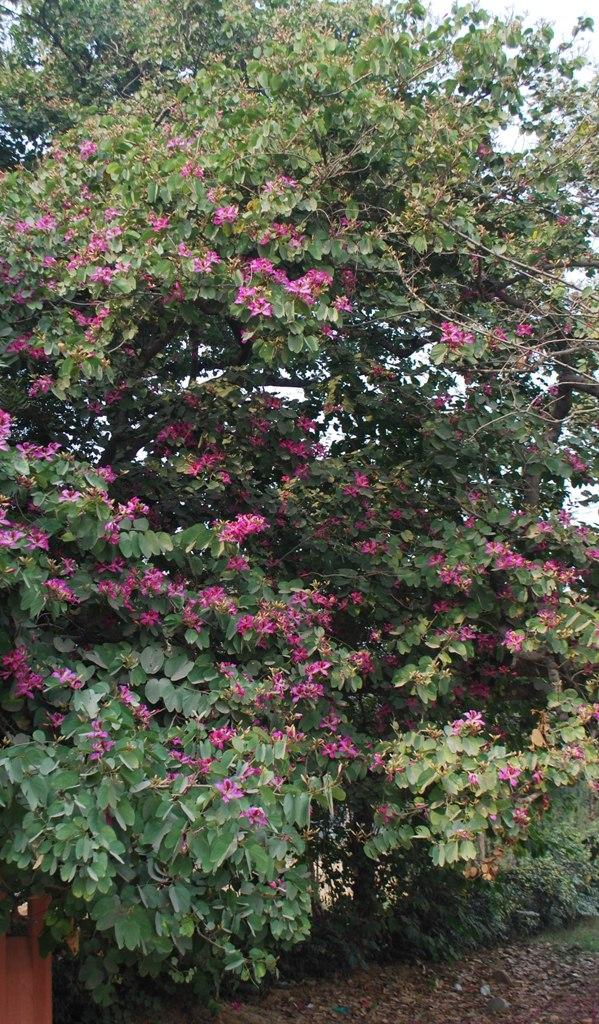 cascade of Pink