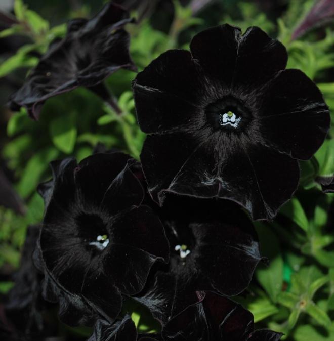 featured black