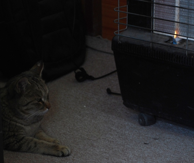 Cat and Heater