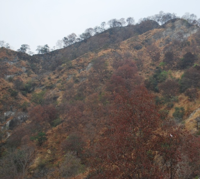 Hills at Haridwar