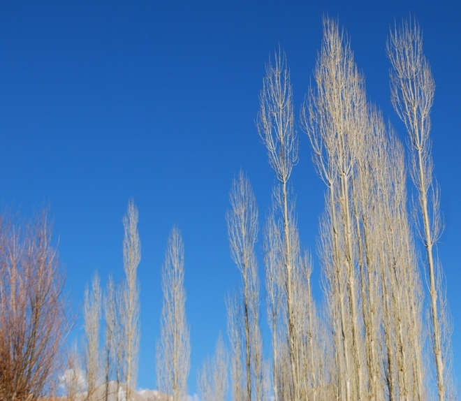 one willow