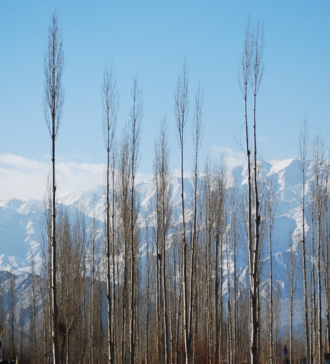 trees and himalayas