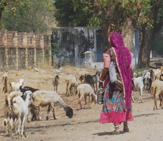 lady shepherd