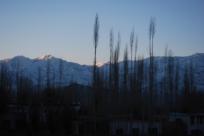 poplars and himalayas