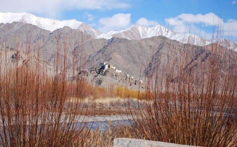 WILLOWS IN LADAKH