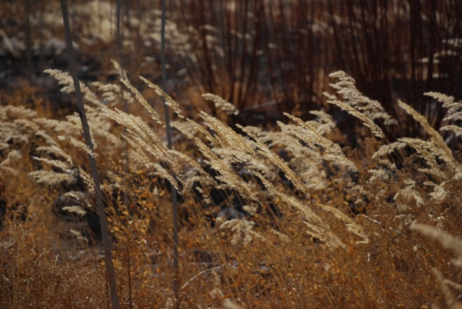 bending in the wind