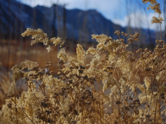 grasslands of the Himalayas