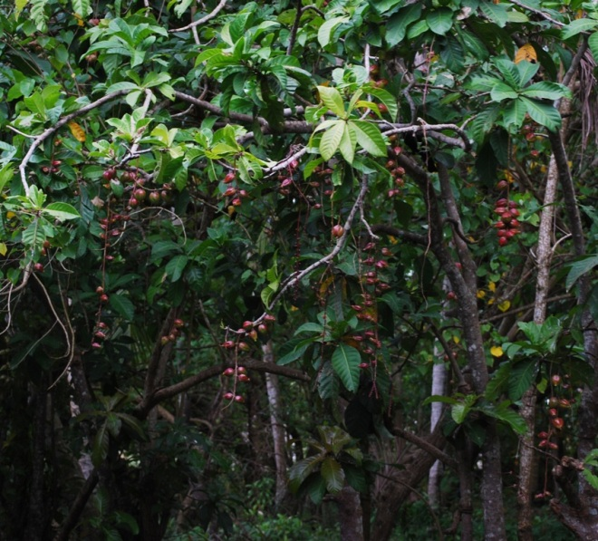 forest of hanging fruits