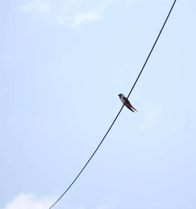 string beween clouds