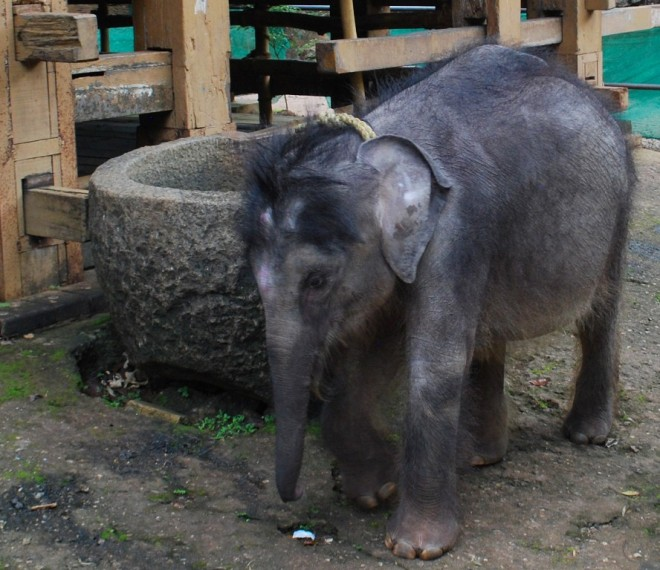 elephant out