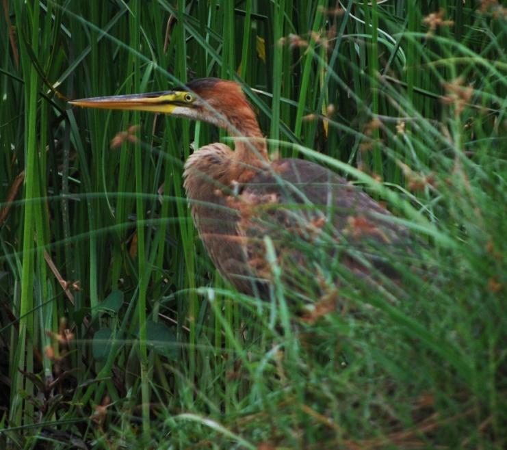hidden in grass