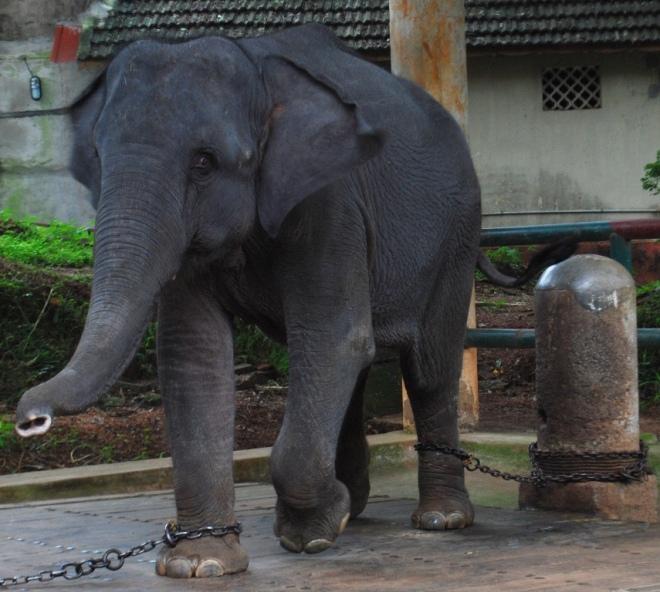 mamma elephant