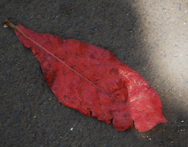 a-single-leaf