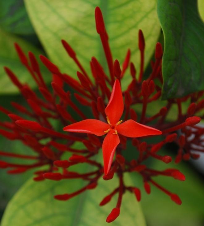 flower-as-cross