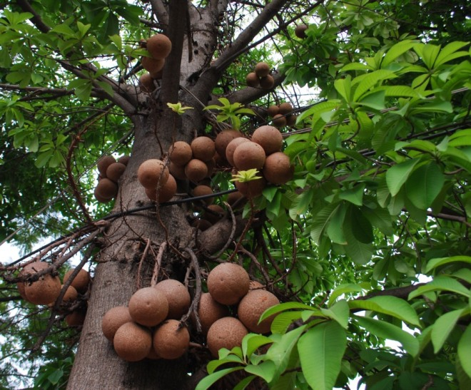 balls-on-tree