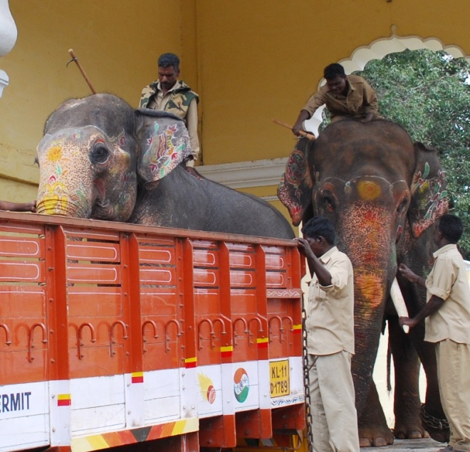 elephant-boards-truck