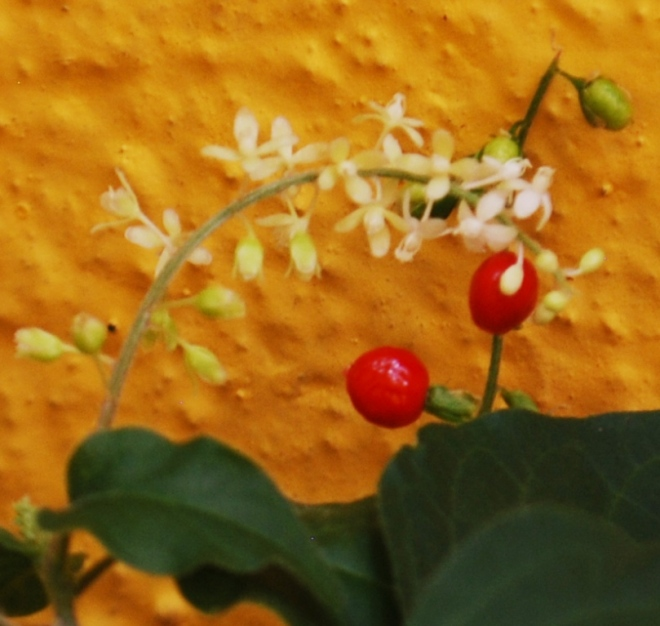 flower-and-fruit