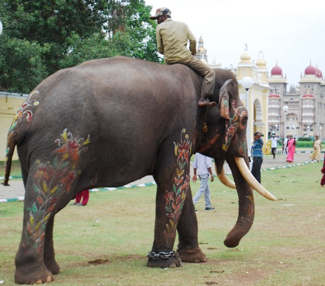 mysore palace and tusker.jpg