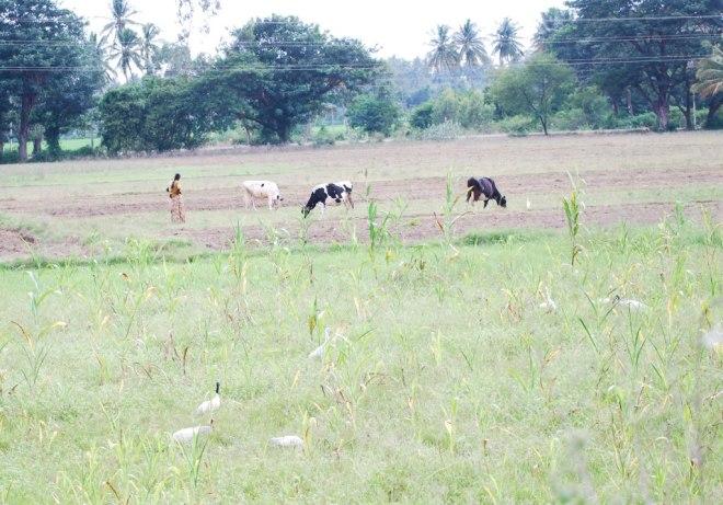 agro-fields