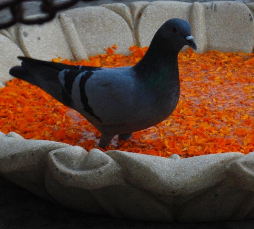 BIRDS VIEW OFKASHI