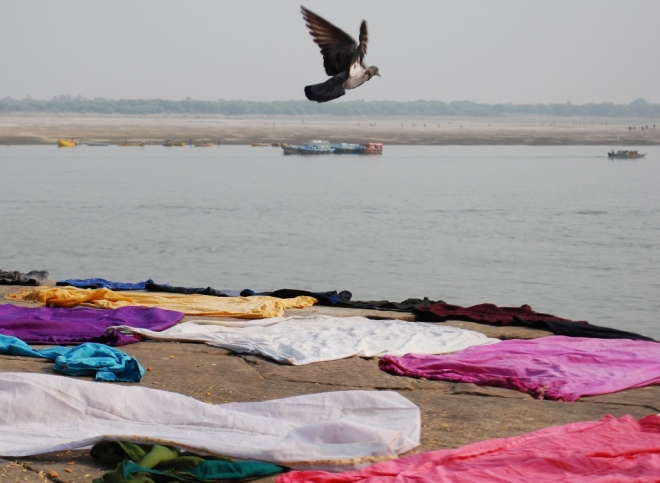 pigeon-and-ganges