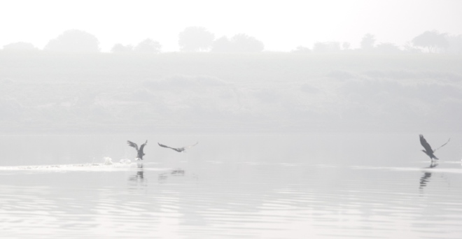 fishing-in-the-chambal