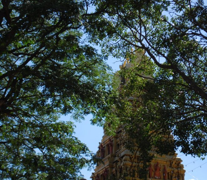temple-and-trees