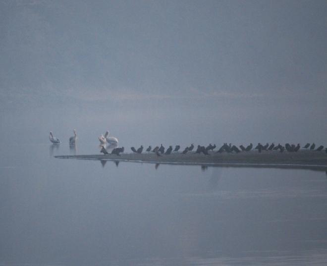 a-bird-island