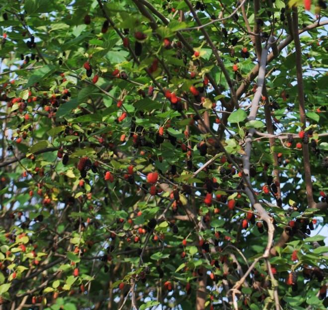 laden tree