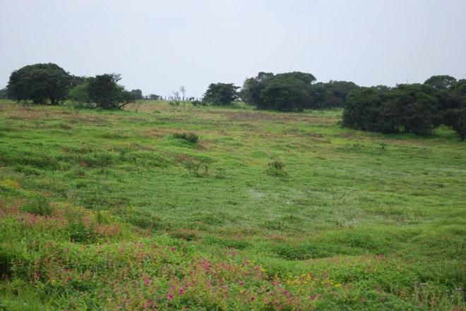 kaas flowers swampy panorama